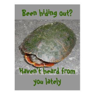 Tartaruga pintada que esconde para fora? Cartão
