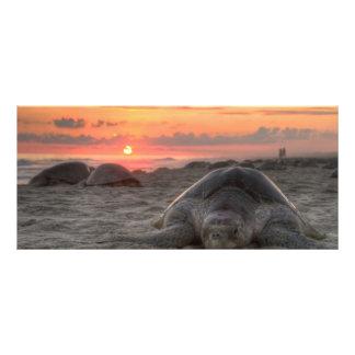 Tartarugas de mar no por do sol 10.16 x 22.86cm panfleto