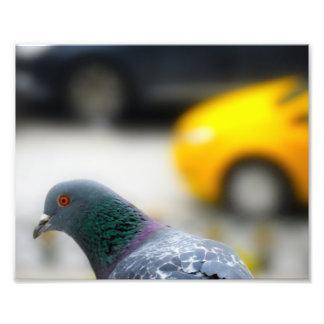Táxi de Istambul com uma foto do pássaro