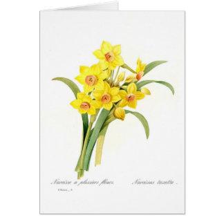 Tazetta do narciso cartão comemorativo