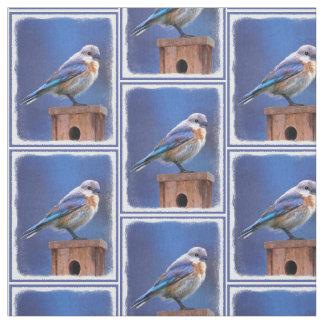 Tecido Bluebird (fêmea)