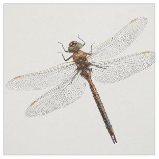 Tecido Close up de uma libélula de Canadá Darner