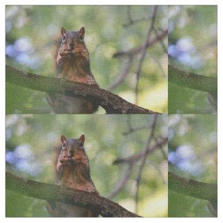Tecido Esquilo da harmônica