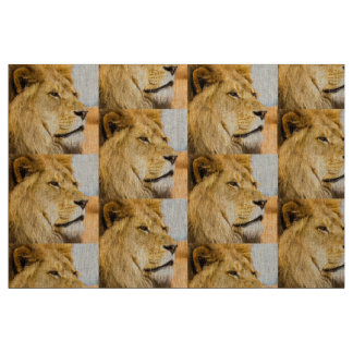 Tecido Leão grande que olha longe