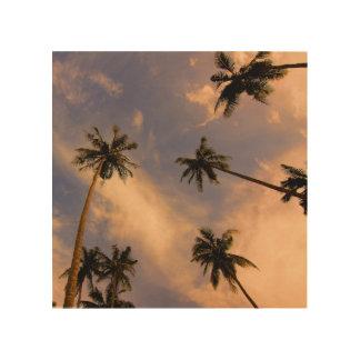 Tela De Madeira A palmeira sae da foto tropical da natureza