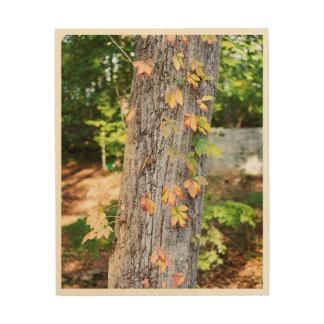 Tela De Madeira A queda rústica deixa o impressão de madeira