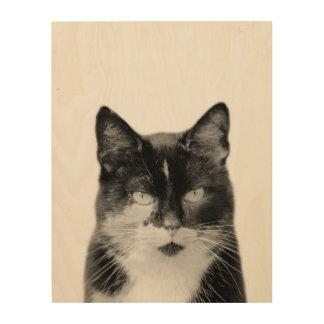Tela De Madeira Animal de estimação animal da fotografia do gato