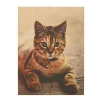 Tela De Madeira Animal de estimação novo bonito do gatinho do