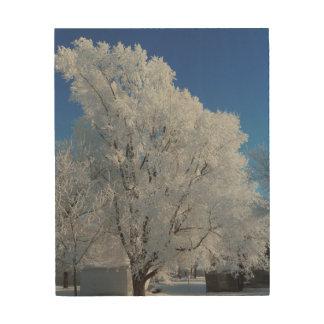 Tela De Madeira Árvore do inverno