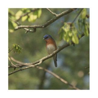 Tela De Madeira Bluebird, cópia de madeira da arte da parede