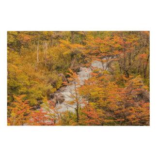 Tela De Madeira Cena colorida da paisagem da floresta, Patagonia