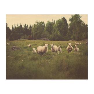 Tela De Madeira Cordeiros macios dos carneiros brancos do rebanho