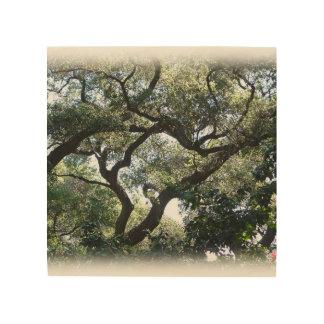 Tela De Madeira Imagem da cor de carvalhos de Califórnia na