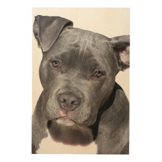 Tela De Madeira Pitbull Terrier americano