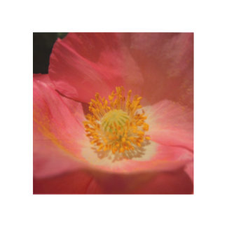 Tela De Madeira Rosa empoeirado papoila colorida
