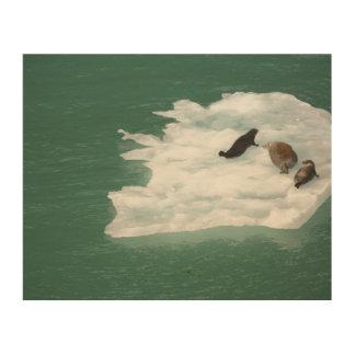 Tela De Madeira Selos em um impressão de madeira do iceberg