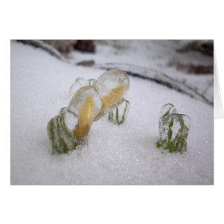 Tempestade de gelo 2003 cartão
