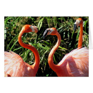 Tempo do flamingo falar - o cartão