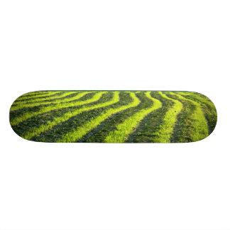 Terra retroiluminada shape de skate 19,7cm