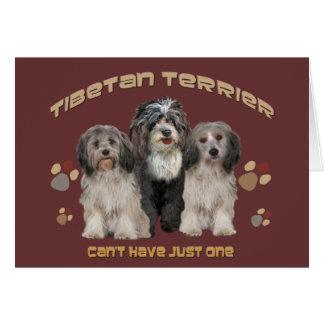 Terrier tibetano todo o cartão da ocasião