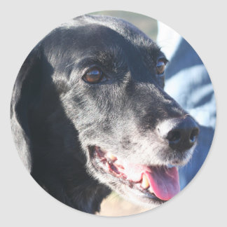 TESS - Labrador preto Photo-4 Adesivos Em Formato Redondos