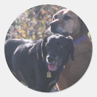 TESS - Labrador - Priscilla Photo-2 Adesivos