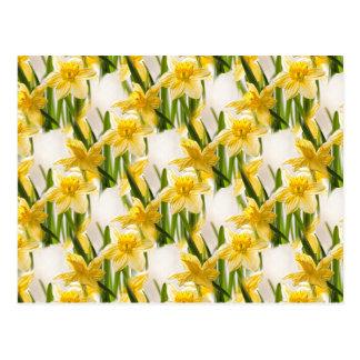 Teste padrão amarelo do papel de parede do Daffodi Cartoes Postais
