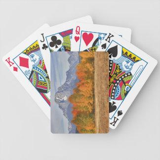 Teton grande NP, montagem Moran e árvores do álamo Carta De Baralho