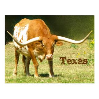 Texas Longhorn com cartão dos fatos