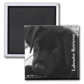 Texto preto do filhote de cachorro do laboratório imã de geladeira