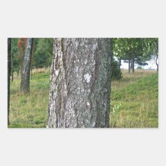 Textura da madeira da árvore adesivos em formato retangulares