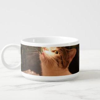 Tigela Gatos e luzes - gato do Natal - árvore de Natal