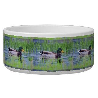 Tigela Pato masculino do pato selvagem que flutua na água