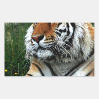 Tigre Adesivo Em Forma Retangular