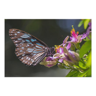 Tigre azul, flor cor-de-rosa impressão de fotos