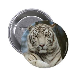 Tigre branco bóton redondo 5.08cm