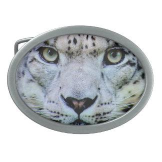 Tigre branco lindo