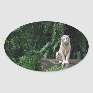 Tigre branco na selva adesivo oval