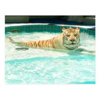 Tigre branco no piscina-Ano do cartão do tigre