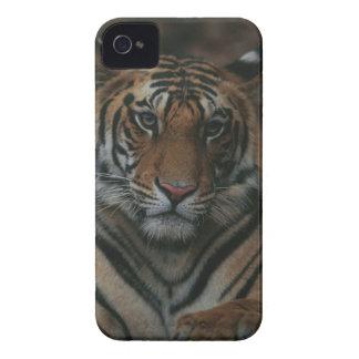 Tigre Cub Capinhas iPhone 4