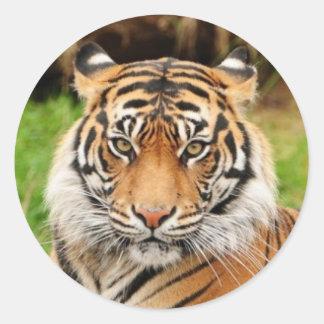 Tigre de Bengal Adesivo Redondo