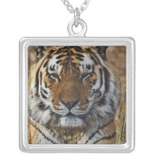 Tigre de Bengal, Panthera jardim zoológico de Colar Com Pendente Quadrado