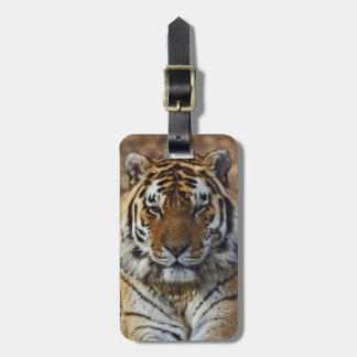 Tigre de Bengal, Panthera jardim zoológico de Etiquetas De Malas De Viagem