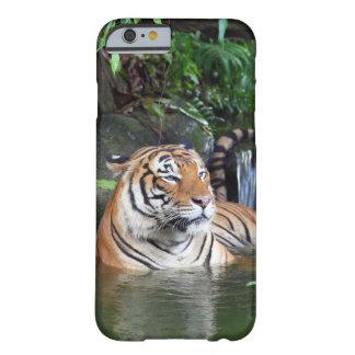 Tigre de Sumatra Capa Barely There Para iPhone 6