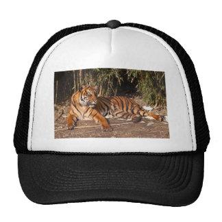 Tigre Lounging Bone