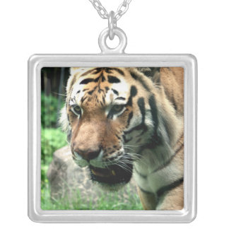 Tigre na colar do jardim zoológico de Bronx