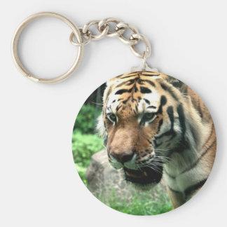 Tigre no chaveiro do jardim zoológico de Bronx