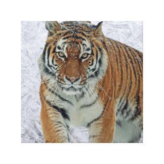 Tigre no impressão das canvas dos flocos de neve