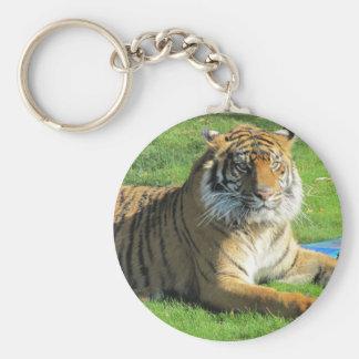 tigre no jardim zoológico chaveiros