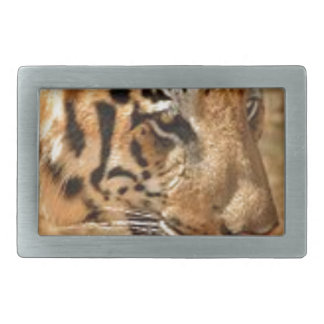 Tigre que desengaça em India
